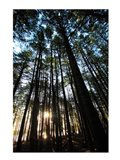 Low angle view of trees in a forest at sunrise