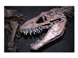 Albertosaurus, Royal Tyrrell Museum, Drumheller, Alberta, Canada - your walls, your style!