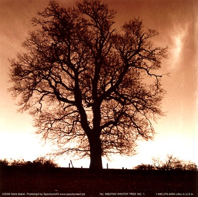 Winter Tree No. 1 Poster by Mark Baker for $8.75 CAD