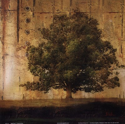 Aged Tree I Poster by Patricia Pinto for $12.50 CAD