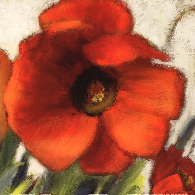 Poppy Splendor Square II (Close up) Poster by Lanie Loreth for $12.50 CAD