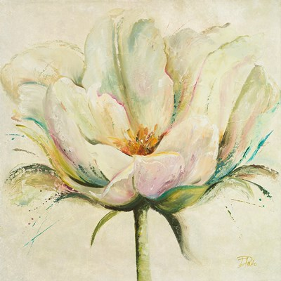 White Double Tulips II Poster by Patricia Pinto for $12.50 CAD