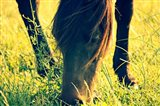 Horse in the Meadow I
