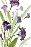 Purple Belles I