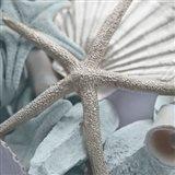 Seashells in Blue II