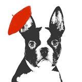 Red Beret Dog
