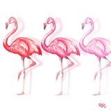 Flamingo Trio II