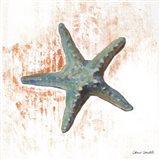 Starfish on White I