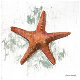 Starfish on White II