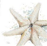Water Starfish