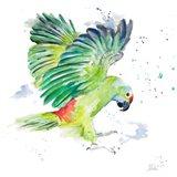 Amazon Parrot I