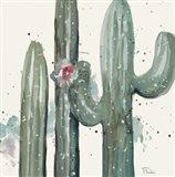 Natural Desert Cactus