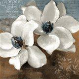 White Magnolias II