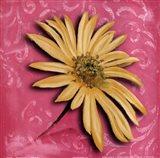 Blooming Daisy II