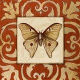 Moroccan Butterfly II