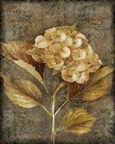 Antique Hydrangea I
