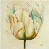 White Double Tulips I