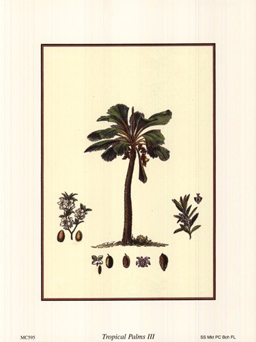 Tropical Palms III Poster by Unknown for $8.75 CAD