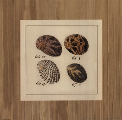 Shells on Rattan I Poster by Wild Apple Studio for $15.00 CAD