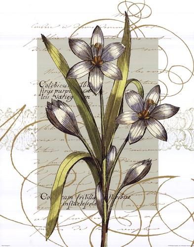 Florilegium I Poster by Wild Apple Studio for $22.50 CAD