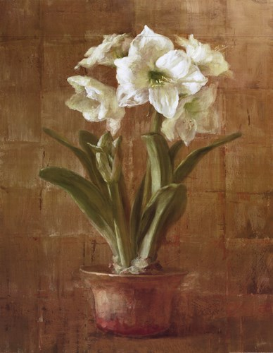 White Amaryllis on Bronze Poster by Danhui Nai for $31.25 CAD