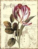 Garden View II - Tulip