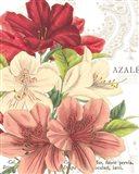 Azalee Jardin II