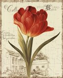 Garden View III - Red Tulip