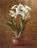 White Amaryllis on Bronze