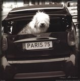 Paris Dog I