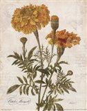 October Marigold