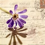 Vintage Letter and Purple Daisy