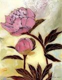Pink Peony Blossom and Bud
