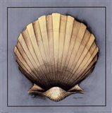 Coastal Shell II