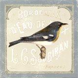 Pariasian Bird I
