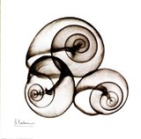X-ray Snail Shells, Sepia Art Print