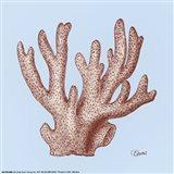 Coral I Art Print