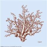 Coral II Art Print