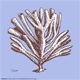 Coral III Art Print