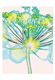Pop Dandelion Art Print