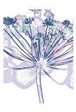 Violet Zen 1 Art Print