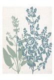 Linen Herbs 2 Art Print