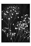 Delicate 1 Art Print