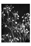 Delicate 2 Art Print