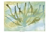Seafoam Coral I Art Print
