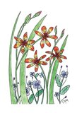 Blackberry Lily Art Print