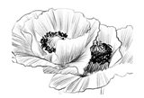 Sketched Poppies 3 Art Print