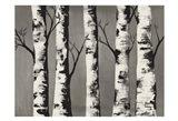 Birch Backwoods Art Print