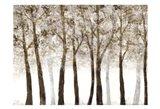 Wooded Grove Art Print
