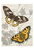 Butterfly Travel 1 Art Print